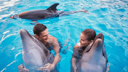 vip-swimming-with-dolphins-for-twou-10-minutes-kharkov